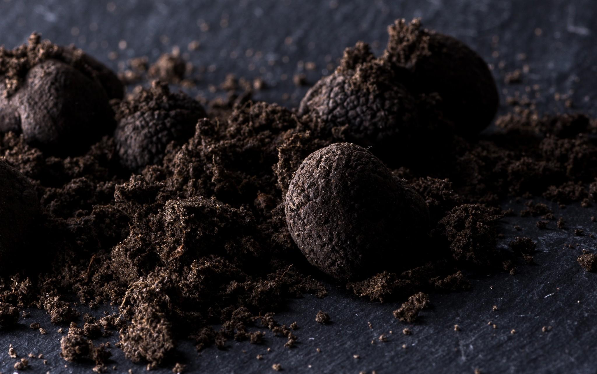 Trufo Shop - The future of truffles